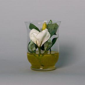 Gardenia in a Small Glass vase