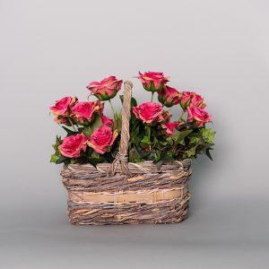 Hot Pink English Rose with Ivy in a Basket