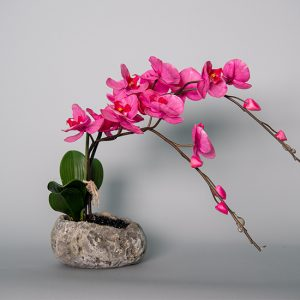 Hot Pink Orchid in a Cement Rock Bowl