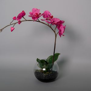 Hot Pink Orchid in a Glass Bowl
