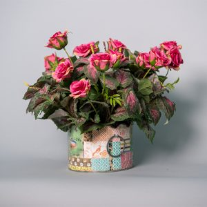 Red Coleus Bush with Hot Pink English Roses in a Chabby Chic Container