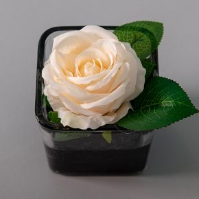 White Rose in a Glass Cup